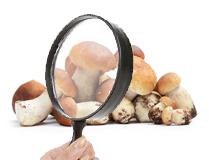 Le 10 domande più frequenti nel mondo dei funghi