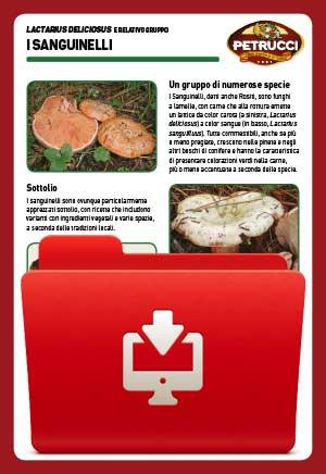 Funghi Sanguinelli