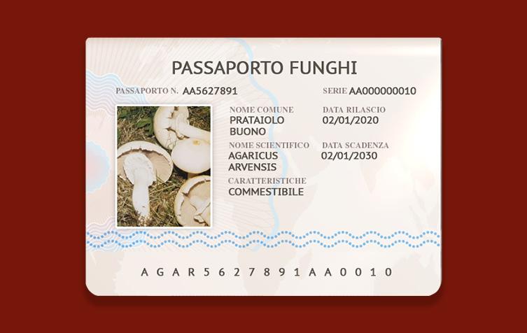 Agaricus Arvensis – Prataiolo Buono