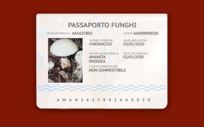 Amanita Ovoidea – Farinaccio