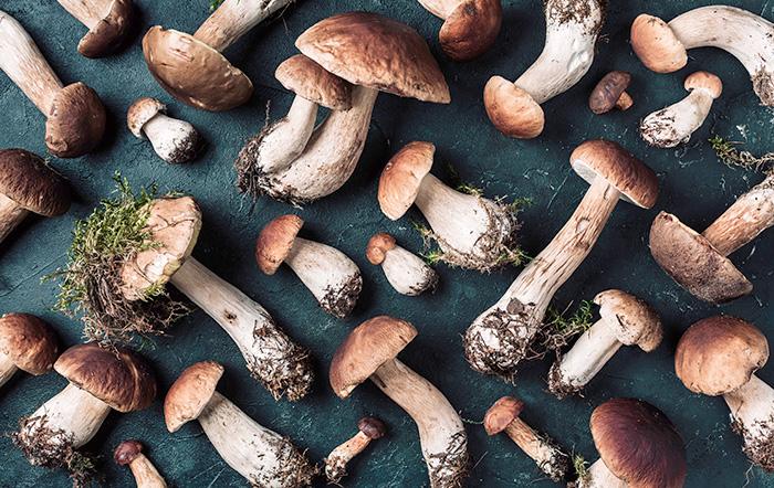 Esistono differenze tra i funghi raccolti in Italia e quelli di provenienza estera?