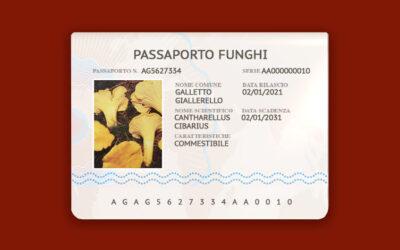 Cantharellus Cibarius – Galletto, Giallerello