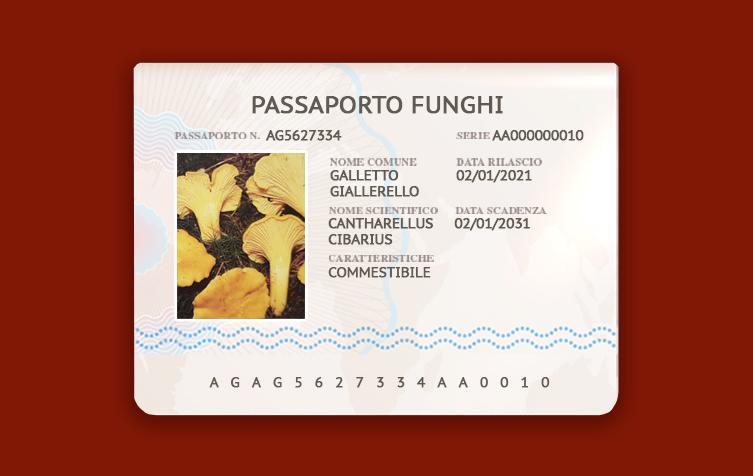 cantharellus-cibarius-galletto-giallerello-fungo-commestibile