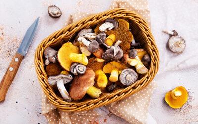 Come si conservano i funghi?