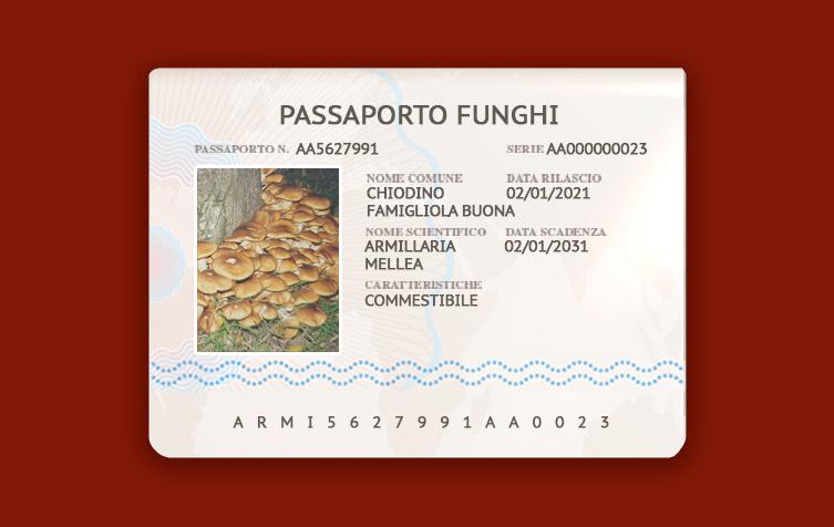 Armillaria-Mellea-Chiodino-famigliola-buona