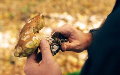 Come si puliscono i funghi?