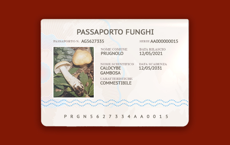 Calocybe Gambosa – Prugnolo