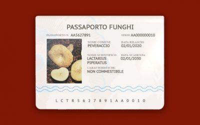 Lactarius Piperatus – Peveraccio