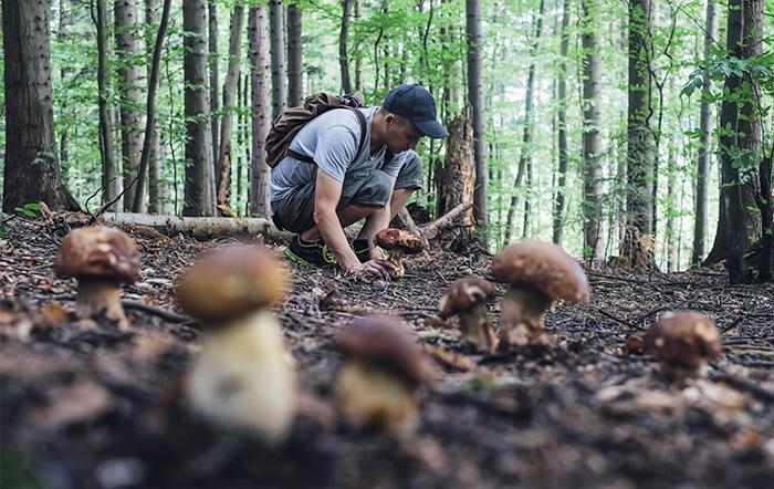 I funghi sono un prodotto stagionale?